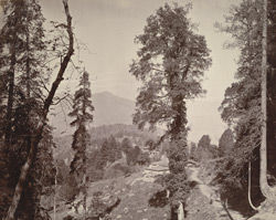 View through trees, Murree 7521261